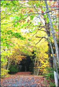 Old Coach Road Trail in Bedford, Nova Scotia