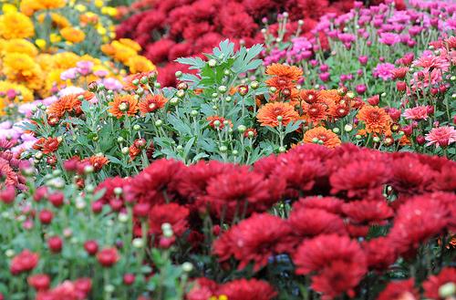farm3.static.flickr.com_2448_4007917833_09d4b189a5