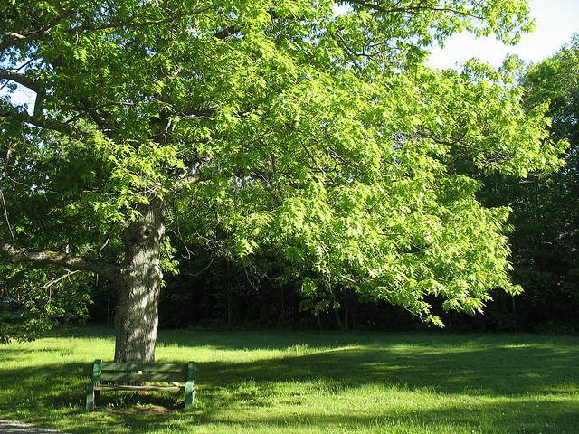 farm2.static.flickr.com_1130_683508134_88b3d54d71_z