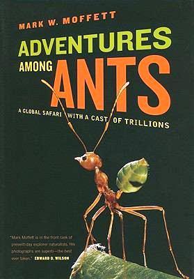 2.bp.blogspot.com__dX-OdaMZJt0_TFgkXV_69fI_AAAAAAAAGco_q8xqPgq7yVw_s1600_adventures+among+ants