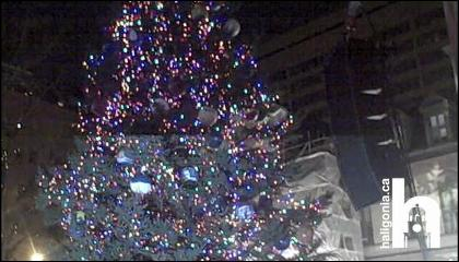 storyimg11_112810_treelighting