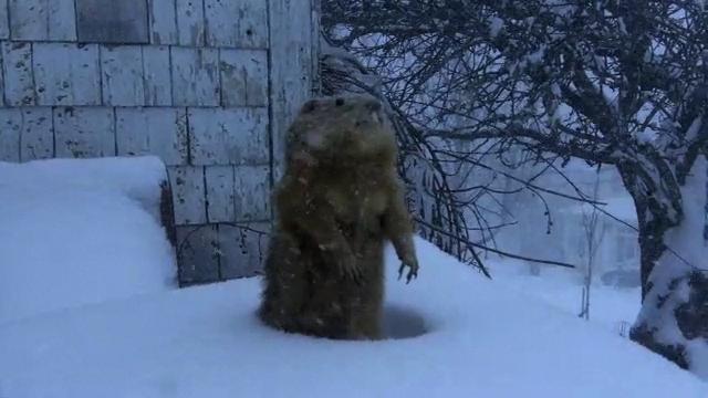 storyimg13_groundhog
