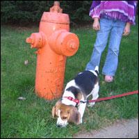 www.bedfordbeacon.com_wp-content_uploads_2011_07_dog-on-leash
