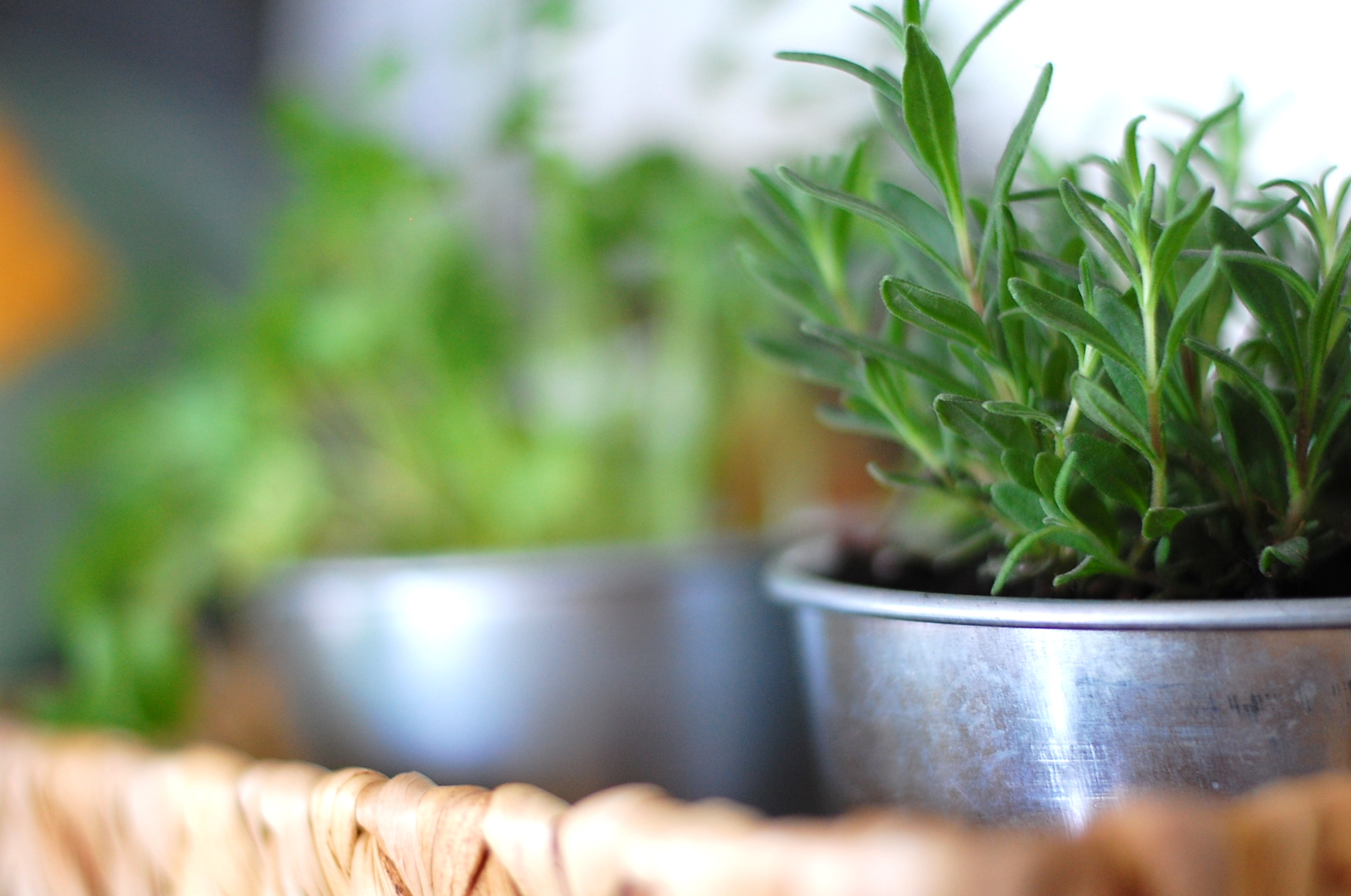 the diy guide to indoor gardening