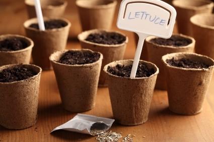 the diy guide to indoor gardening