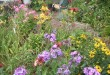www.hellodartmouth.ca_wp-content_uploads_2014_10_Garden-Debbie