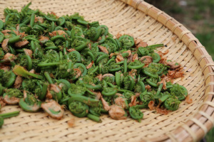 fiddleheads 4