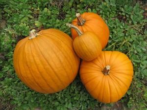 pumpkin pics 002