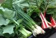 csa-veggies
