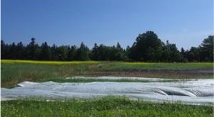 crop-burial-ground