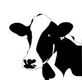 portrait-big-black-and-white-cow-vector-clip-art-vector_k12522271